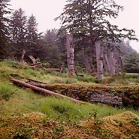 Ninstints (UNESCO World Heritage Site), Haida Gwaii (Queen Charlotte Islands), Northern BC, British Columbia, Canada - Historic Haida Mortuary Totem Poles on Anthony Island (Skung Gwaii), Gwaii Haanas National Park Reserve and Haida Heritage Site