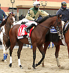 Samraat (#1A) with Jose Ortiz holds Uncle Sigh and In Trouble to win the 62nd running of the Grade 3 Gotham Stakes for 3-year olds, going 1 1/16 mile on the inner dirt, at Aqueduct Racetrack.  Trainer: Richard Violette. Owner: My Meadow Stable