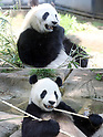 Giant panda gives birth at Ueno Zoological Garden in Tokyo