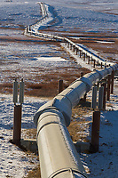 Trans Alaska oil pipeline traverses the tundra of Alaska's Arctic, north of the Brooks Range.