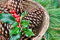 Basket of pine cones and holly. Al's Garen Nursery. Sherwood, Oregon
