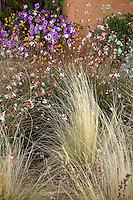 New Mexico xeriscape garden with perennial Gaura lindheimeri and Threadgrass (Nassella tenuissima)