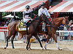 Lewis Bay in the post parade as Marley's Freedom (no. 7) wins the Ketel One Ballerina  Stakes (Grade 1), Aug. 25, 2018 at the Saratoga Race Course, Saratoga Springs, NY.  Ridden by  Mike Smith, and trained by Bob Baffert, Marley's Freedom finished 3 3/4 lengths in front of Still There (No. 3).  (Bruce Dudek/Eclipse Sportswire)