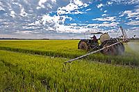 Pulverizaçao de agrotoxico em plantaçao de arroz. Deodapolis. Mato Grosso do Sul. 2010. Foto de Ubirajara Machado.