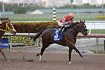 January 02, 2016: #3 Awesome Speed (KY) with jockey Joel Rosario on board wins the Mucho Macho Man Stakes at Gulfstream Park in Hallandale Beach, FL.  Liz Lamont/ESW/CSM