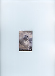 FB-M2  Elephant seal yearling