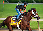 Gemologist , trained by Todd Pletcher and to be ridden by J.J. Castellano, works out in preparation for the 138th Kentucky Derby at Churchill Downs in Louisville, Kentucky on May 3, 2012
