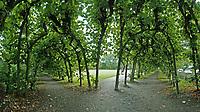 Wacholderpark: EUROPA, DEUTSCHLAND, HAMBURG 22.09.2017 Wacholderpark<br /> Inmitten der vielen weitläufigen Landschaftsparks, die während des 18. und 19. Jahrhunderts in Hamburg entstanden, stellt der kleine Wacholderpark in Fuhlsbüttel eine schöne Ausnahme dar. Er war nie ein privater Garten, sondern stets ein öffentlich zugänglicher Stadtteilpark, der einst im Zusammenhang mit neuer Wohnbebauung entstand. Mit dem Bau der Vorortbahn wurde um 1910 auch dieser Bereich für eine Bebauung erschlossen und zeitgleich ein Park für die neuen Bewohner geplant, der ursprünglich auch als Öffentlicher Garten Fuhlsbüttel bezeichnet wurde.