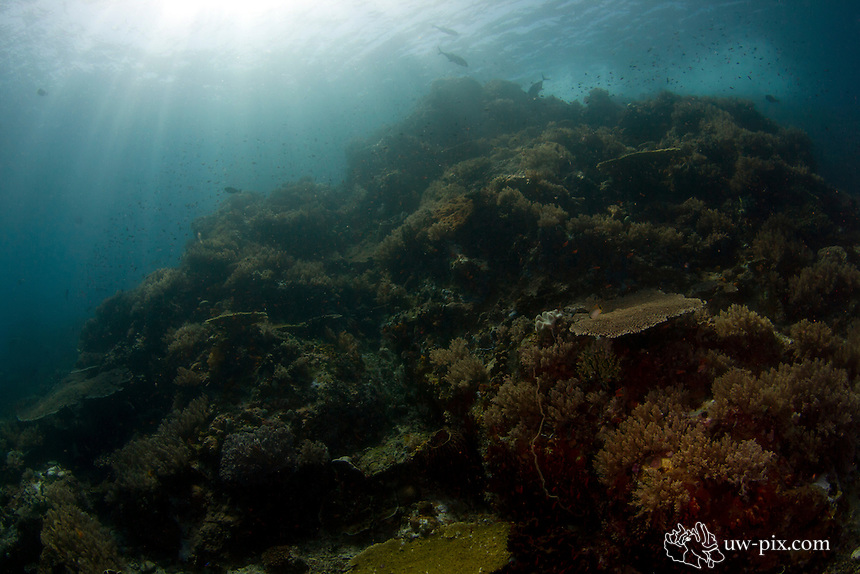reefscene Komodo National Park - Indonesia