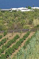 - island of Pantelleria,  typical house said dammuso, cultivation of the grapevine for the production of Passito wine....- isola di Pantelleria, abitazione tipica detta dammuso, coltivazione della vite per la produzione del vino Passito