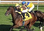 October 24, 2014:Trace Creek and Chris Landero win the 9th race, Allowance $60,000 at Keeneland Racecourse.  Candice Chavez/ESW/CSM