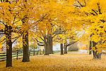 Fall foliage on a farm road in Hollis, NH, USA
