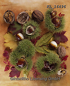 Interlitho-Alberto, STILL LIFE STILLEBEN, NATURALEZA MORTA, paintings+++++,chestnuts,KL16496,#i#, EVERYDAY ,autumn