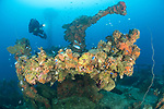 The wrecks of Truk Lagoon : Unkai Maru