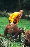 Melbourne Australia. Tourists relating to kangeroos at the Australian Wildlife Park