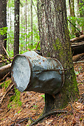 Tree growing through the handle of a bucket (artifact) along the Thoreau Falls Trail in the Pemigewasset Wilderness of Lincoln, New Hampshire. This bucket is considered an artifact of the East Branch & Lincoln Railroad (1893-1948).