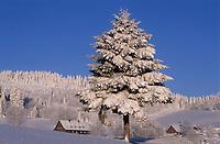 Europe/Allemagne/Forêt Noire/Env de Hinterzarten : Chalet et sapin en hiver