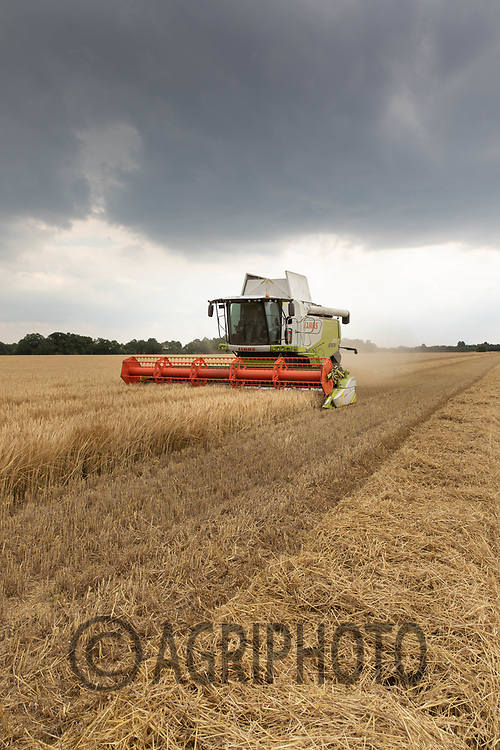 Harvesting Winter Barley in South Lincolnshire<br /> ©Tim Scrivener Photographer 07850 303986<br />      ....Covering Agriculture In The UK....