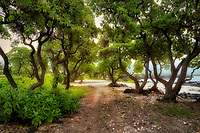 Alakahai Trail,trees and path at Kohanaiki Beach Park. Hawaii, The Big Island