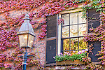 Autumn-colored ivy on Beacon Hill, Boston, MA, USA