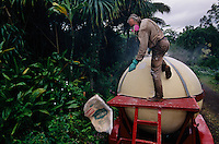 The community of Pahoa, south of Hilo and near Lava Tree State Park, bought a 10,000 gallon sprayer and is coating the jungle in their backyards with hydrated lime, which they hope will curb the number of Coqui frogs.  Its numbers are exploding--and it has no predators. <br /> The Coqui--much revered in its native Puerto Rico--was first imported on plant material. The Coqui is as large as a quarter and has a chirpy little call that is the decibel level of a lawnmower. <br /> <br /> Its ability to quickly adapt to Hawaii from its native Puerto Rico and reach unprecedented numbers, the absence of predators, and its noisy mating behavior have made the coqui frog the target of government and community eradication and controlefforts.