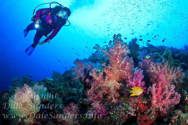 A female scuba diver observing the colorful soft corals found in the Witu Islands off New Britain Island, Papua New Guinea.