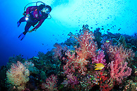 A female scuba diver observing the colorful soft corals found in the Witu Islands off New Britain Island, Papua New Guinea.