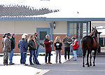 17 January 2010.   Kentucky Stallion Farms.  A stallion is inspected by fans and breeders during a stallion show.