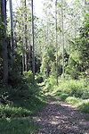 Forest Scene, Sub Tropical Rainforest, Dorrigo Plateau, New South Wales