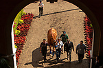 """DEL MAR, CA  JULY 28:  Eduardo G. """"Lalo"""" Luna, Humberto Gomez and Jimmy Barnes escort Triple Crown winner Justify from the paddock to the track to celebrate him on July 28, 2018 at Del Mar Thoroughbred Club in Del Mar, CA.  (Photo by Casey Phillips/Eclipse Sportswire/Getty Images)"""