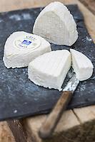 France, Aude (11), Ferrals-les-Corbières, Chèvrerie la Balnautière , fromages de chèvre fermiers: L' Ecu du Pays Cathare// France, Aude, Ferrals les Corbieres, Chevrerie la Balnautiere, Goat farmer cheese: Ecu du Pays Cathare