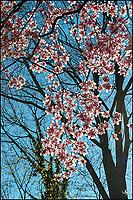 Sunlit Magnolia flowers.