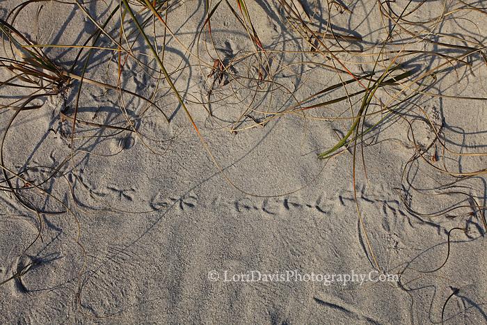Bird Tracks In The Sand 2