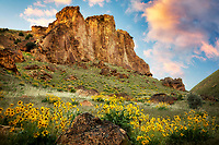 Balsamroot wildflowers and rock formations in Leslie Gultch. Malhuer County, Oregon