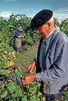 Europe/France/Aquitaine/24/Dordogne/Env de Bergerac: Vendanges à Château Lavaud AOC Bergerac [Non destiné à un usage publicitaire - Not intended for an advertising use]<br />  PHOTO D'ARCHIVES // ARCHIVAL IMAGES<br /> FRANCE 1980