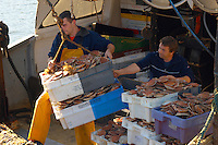 Fisherman landing Scallops off a fishing boat - Honfleur France.