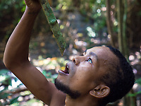 A tribal Aeta from this specific part of the Philippines drinking water from a Jungle Vein in the Jungle, the Aetas are famous for their survival skills and have trained the US Armed forces in the past, Pampanga, Philippines