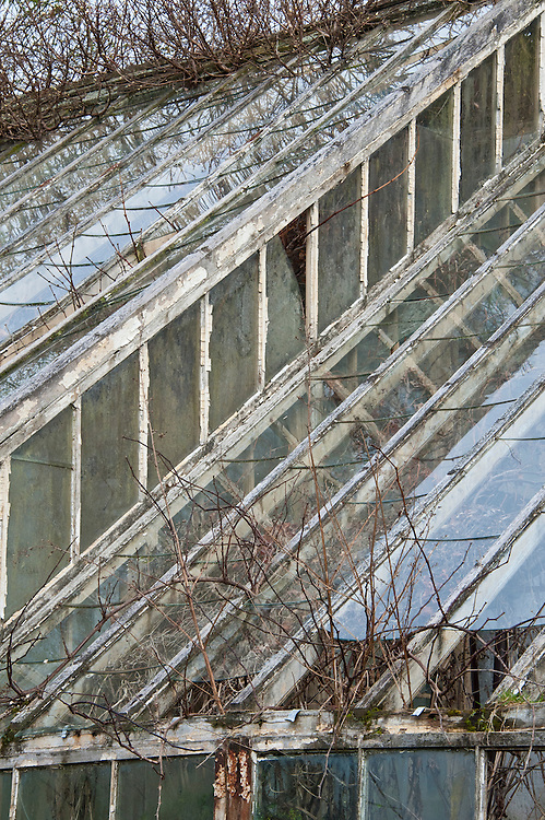 Derelict greenhouse, walled kitchen garden, Trevarno, Cornwall, mid February. Built between 1877 and 1908 to house peach trees and Black Hamburg and Muscat grape vines.