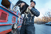 Iditarod musher Charley Benja takes out a dog from the dog box at the 2016 Iditarod Pre-race vet check in Wasilla, Alaska. March 02, 2016 <br /> <br /> © Jeff Schultz/SchultzPhoto.com ALL RIGHTS RESERVED<br /> DO NOT REPRODUCE WITHOUT PERMISSION