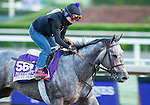 ARCADIA, CA - NOV 02: Tara's Tango, owned by Stonestreet Stables, LLC and trained by Jerry Hollendorfer, exercises in preparation for the Breeders' Cup Filly & Mare Sprint at Santa Anita Park on November 2, 2016 in Arcadia, California. (Photo by Kazushi Ishida/Eclipse Sportswire/Breeders' Cup)