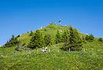 Austria, Vorarlberg, Kleinwalsertal, Mittelberg: summit Walmendingerhorn 1.990m, an alpine flowers nature trail leading from cable car upper station to the summit | Oesterreich, Vorarlberg, Kleinwalsertal, Mittelberg: das Walmendingerhorn 1.990 m, von der Bergstation der Walmendingerhornbahn fuehrt ein Alpenblumenlehrpfad zum Gipfelkreuz