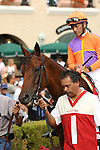 """DEL MAR, CA  JULY 30: Beholder and Gary Stevens in the paddock before the Clement L. Hirsch Stakes (Gl) """"Win and You're in Breeders' Cup Distaff Division"""" at Del Mar Turf Club in Del Mar, CA on July 30, 2016. (Photo by Casey Phillips/Eclipse Sportswire/Getty Images)DEL MAR, CA  JULY 30: #2 Stellar Wind with Victor Espinoza beat Beholder and Gary Stevens in the Clement L. Hirsch Stakes (Gl) """"Win and You're in Breeders' Cup Distaff Division"""" at Del Mar Turf Club in Del Mar, CA on July 30, 2016. (Photo by Casey Phillips/Eclipse Sportswire/Getty Images)"""
