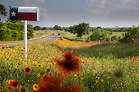 Deep in the Texas country side, a Texas Flag mailbox surrounded by vivid Indian Blanket Firewheels and colorful Yellow Daisy Coreopsis; Gaillardia wildflowers next to country road in the Texas Hill Country - Stock Image