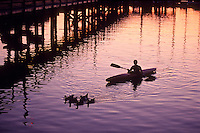 Boy Kayaking with Ducks at Sunset at Fords Cove, Hornby Island, British Columbia, Canada.