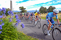 The peleton starts down West Bush Rd on the second lap of stage five of the NZ Cycle Classic UCI Oceania Tour in Masterton, New Zealand on Tuesday, 26 January 2017. Photo: Dave Lintott / lintottphoto.co.nz