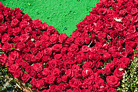 Antigua, Guatemala. Detail of an  alfombra (carpet) of roses and colored sawdust decorating the street in advance of the passage of a procession during Holy Week, La Semana Santa.