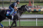 OCT 27 2014:Imperia, trained by Kiaran McLaughlin, exercises in preparation for the Breeders' Cup Juvenile Turf at Santa Anita Race Course in Arcadia, California on October 27, 2014. Kazushi Ishida/ESW/CSM