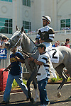 30 May 2009 : Hightap with Shaun Bridgmohan up, in the paddock for the 35th running of the G3 Dogwood Stakes at Churchill Downs in Louisville, Kentucky.