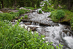 white wildflowers beside inlet stream for Thunder Lake, nature, summer, Rocky Mountain National Park, Colorado, USA, Rocky Mountains
