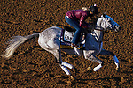 November 3, 2020: Valiance, trained by trainer Todd A. Pletcher, exercises in preparation for the Breeders' Cup Distaff at Keeneland Racetrack in Lexington, Kentucky on November 3, 2020. John Voorhees/Eclipse Sportswire/Breeders Cup/CSM